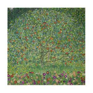 Apple Tree I, 1911 or 1912 Oil on canvas (109 x 110 cm) Estates of Ferdinand and Adele Bloch-Bauer. by Gustav Klimt