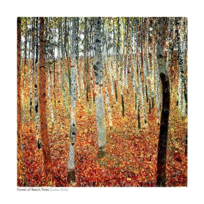 Forest of Beech Trees, c.1903