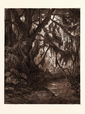 The Rest in the Forest by Gustave Dore