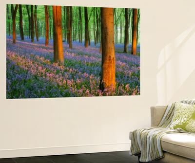 Affordable Botanical Wall Murals Posters for sale at AllPosterscom