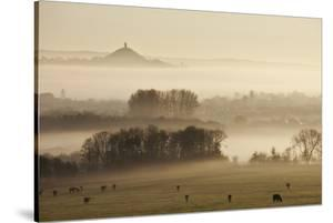 View Towards Glastonbury Tor from Walton Hill at Dawn, Somerset Levels, Somerset, England, UK by Guy Edwardes