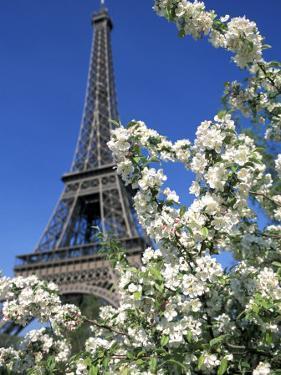 Eiffel Tower, Paris, France by Guy Thouvenin