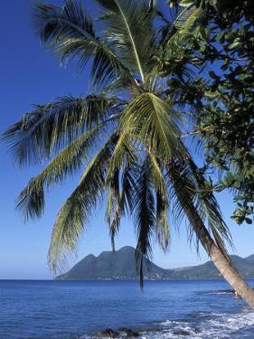 Morne Larcher, Baie De La Chery (Chery Bay), Martinique, West Indies, Caribbean, Central America by Guy Thouvenin