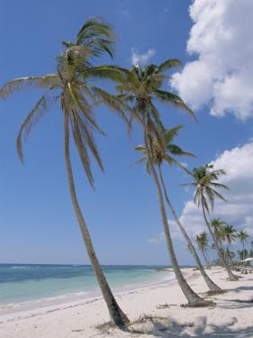 Saona Island, South Coast, Dominican Republic, Central America by Guy Thouvenin
