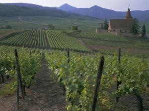 Vineyards, Hunawihr, Alsace, France by Guy Thouvenin