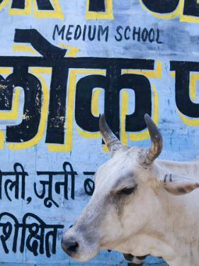 Sacred Cow by Guylain Doyle