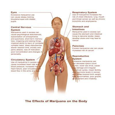 Effects of Marijuana Use