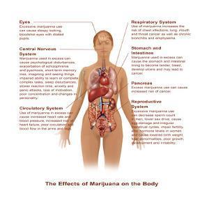 Effects of Marijuana Use by Gwen Shockey