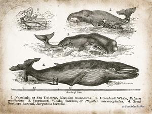 Antique Whales II by Gwendolyn Babbitt