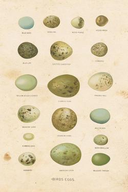 Birds Eggs I by Gwendolyn Babbitt
