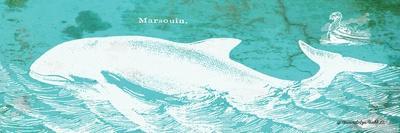 Caribbean Whale II