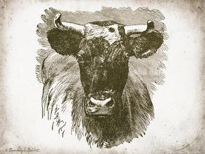 Cow Face I by Gwendolyn Babbitt
