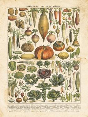 French Vegetable Chart by Gwendolyn Babbitt