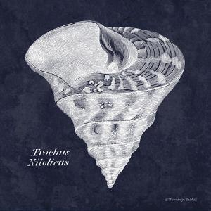 Indigo Shell IV by Gwendolyn Babbitt