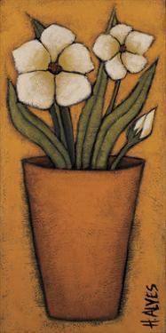 Flores Brancas II by H Alves