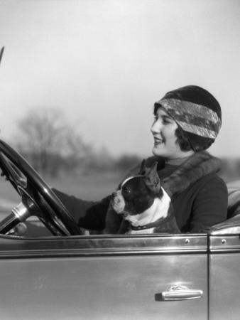 Woman at Steering Wheel Driving Car With Boston Terrier Passenger by H. Armstrong Roberts