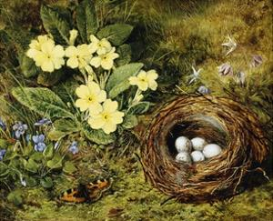 Primroses with a Bird's Nest by H. Bernard Grey