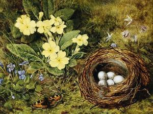 Primroses with a Bird's Nest by H. Bernard Grey