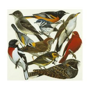 Painting of Various Migratory Songbirds Whose Numbers are Declining by H. Douglas Pratt