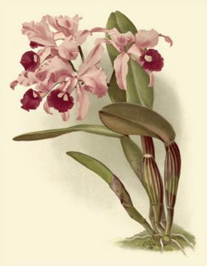 Dramatic Orchid III by H.g. Moon