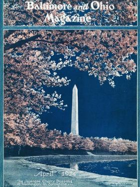 Japanese Cherry Blossoms 1924 by H.H. Rideout