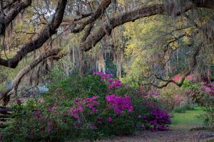 Oaks and Azaleas by H.J. Herrera
