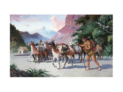 Llama Herders Drive their Pack, Loaded with Fine Textiles and Pottery by H.M. Herget