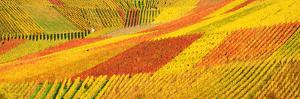 Autum Vineyard Panorama by Habub3