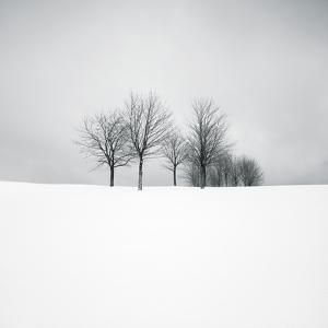 Wintertide by Hakan Strand
