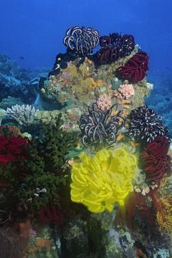Coral Reef with Feather Stars by Hal Beral