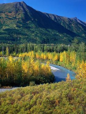 Mts and Trees in Autumn, Denali National Park, AK by Hal Gage