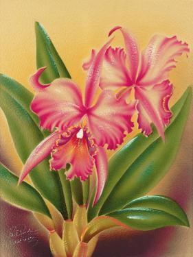 Cattleya, Pink Orchid Tropical Flowers by Hale Pua Studio