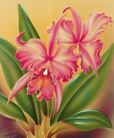 Cattleya, Pink Orchid Tropical Flowers