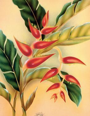 Heliconia, Hawaiian Tropical Flower c.1940s by Hale Pua Studio