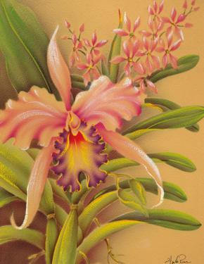Pink Cattleya Orchid Flower by Hale Pua Studio