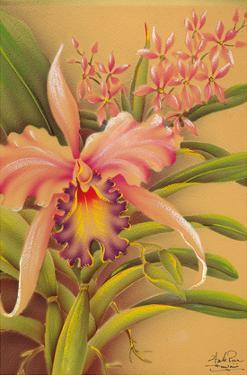 Pink Cattleya Orchid Flower by Hale Pua Studio