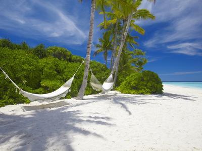https://imgc.allpostersimages.com/img/posters/hammock-on-empty-tropical-beach-maldives-indian-ocean-asia_u-L-PFNYSQ0.jpg?p=0