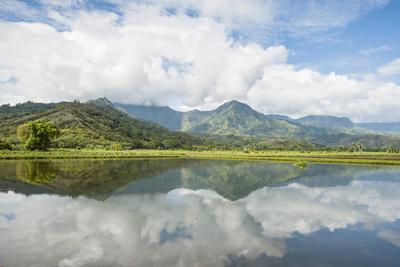https://imgc.allpostersimages.com/img/posters/hanalei-national-wildlife-refuge-hanalei-valley-kauai-hawaii-united-states-of-america-pacific_u-L-PWFF470.jpg?p=0