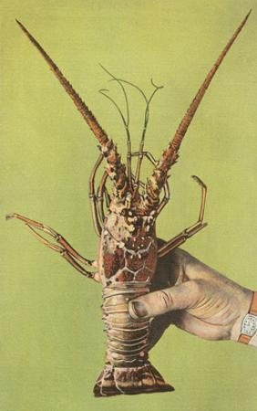 Hand Holding Lobster