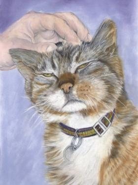 Hand Petting Cat