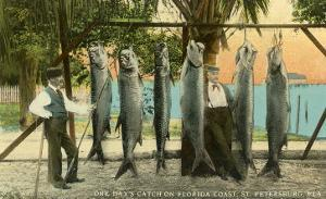Hanging Fish, St. Petersburg, Florida