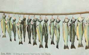 Hanging Trout, Soo Rapids, Michigan