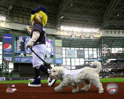 Hank the Dog, the Milwaukee Brewers Mascot 2014