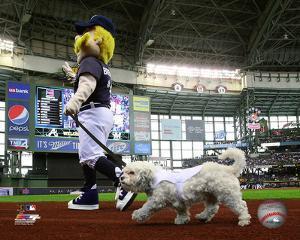 Hank the Dog, the Milwaukee Brewers Mascot 2014