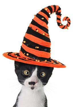 Cross Eyed Kitten Wearing A Halloween Witch Hat by Hannamariah