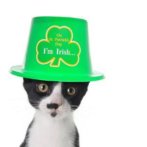 Cute Black and White Kitten Wearing a St Patricks Day Hat by Hannamariah