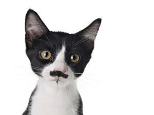 Cute Black And White Kitten With A Mustache by Hannamariah