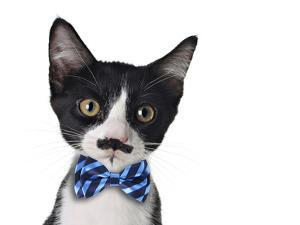 Cute Black and White Kitten with Mustache and Bow Tie by Hannamariah