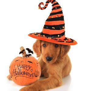 Cute Halloween Puppy with a Pumpkin by Hannamariah