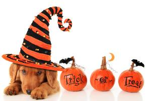 Cute Puppy Wearing a Halloween Witch Hat by Hannamariah